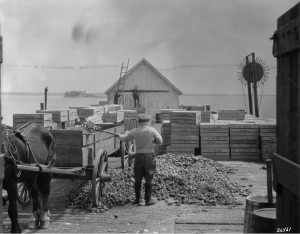 """Lobster Plant, 1926"" Canadian National Railways/Library and Archives Canada/PA- R231-1235-X-E"