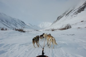 Dog-sledding photo I took in Kluane Park. Amundsen owed his conquest of the South Pole to dog-sledding techniques he learned from Inuit.
