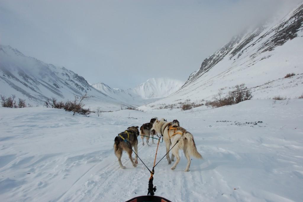 Dog Sledding Park City Utah