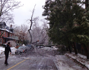 A picture of a fallen tree blocking a road in Toronto's Annex neighbourhood.