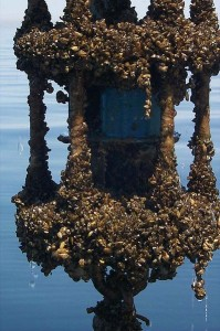Water meter encrusted with zebra mussels.  Wikimedia Commons.