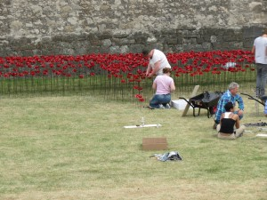 Poppy installation. Photo by author.