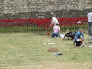 Poppy installation. Photo by author.