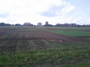 Field 1 at the CEF. Author's photo