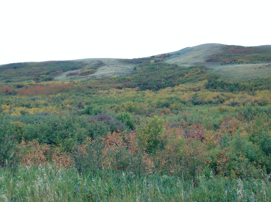 Vibrant fall colors of the Wood Mountain hills. Photo Credit: Claire Thomson