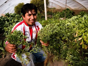 "The Harper government was anxious to foster entrepreneurship as part of its development goals. This photo from the Global Affairs International Development website's ""Economic Growth"" gallery claims to depict a successful development project at an unnamed Peruvian greenhouse."