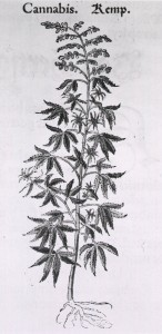 cannabis - images - NLM US - public domain