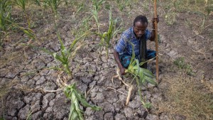 Farmer displays failed crops in Megenta, Ethiopia in January. VOA News