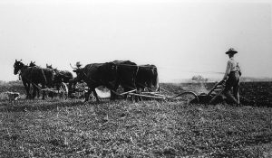 Image of person working a field with horses and plow