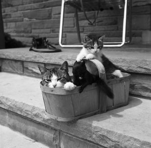 Two cats in basket