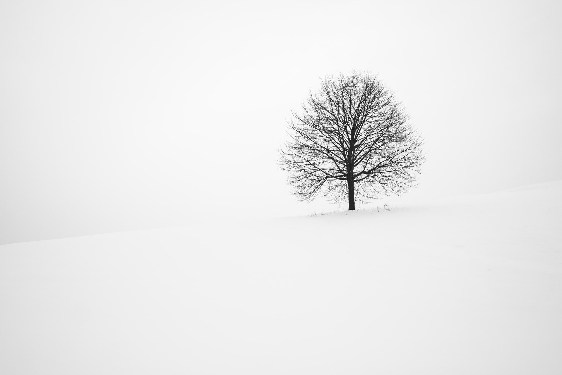 tree on a snow covered hill